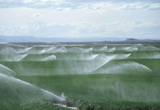 Uzbekistan to expand drip irrigation at cotton fields