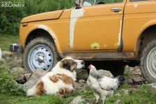 Невероятные кадры из Гедабекского района Азербайджана (ФОТО) - Gallery Thumbnail