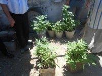 Siyəzəndə vətəndaşın həyətəində külli miqdarda narkotik aşkarlandı (FOTO) - Gallery Thumbnail