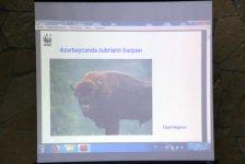 В Азербайджане успешно завершился экологический летний лагерь «Возвратим зубров в нашу природу!» (ФОТО) - Gallery Thumbnail