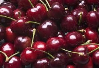 Uzbekistan exports wild cherry to China