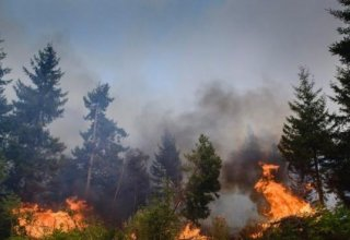 Fires in central Chile consume over 3,200 hectares