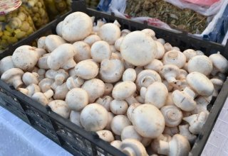 Iran plans to increase mushroom production and exports
