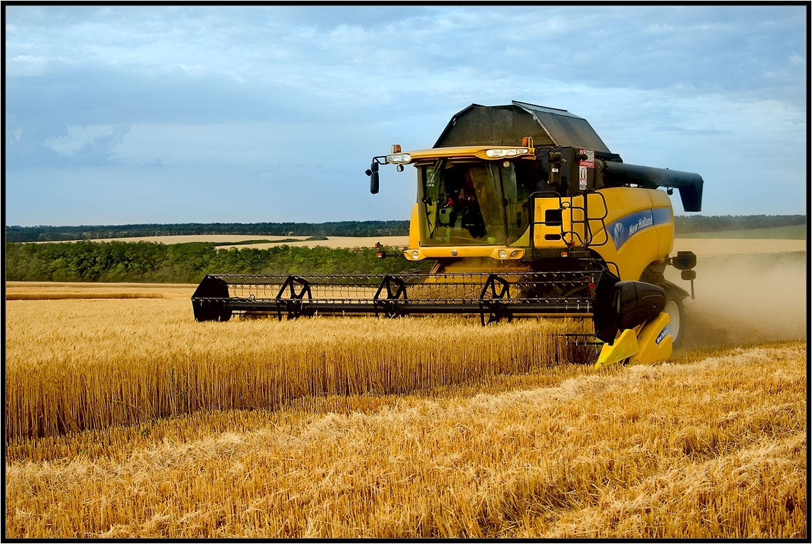 Iran discloses volume of purchased wheat