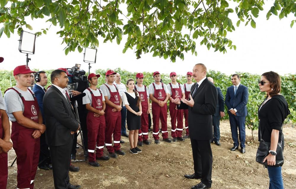 President Ilham Aliyev, first lady Mehriban Aliyeva attend opening of vine-growing and wine-making complex of Shirvan wines LLC in Shamakhi district (PHOTO)