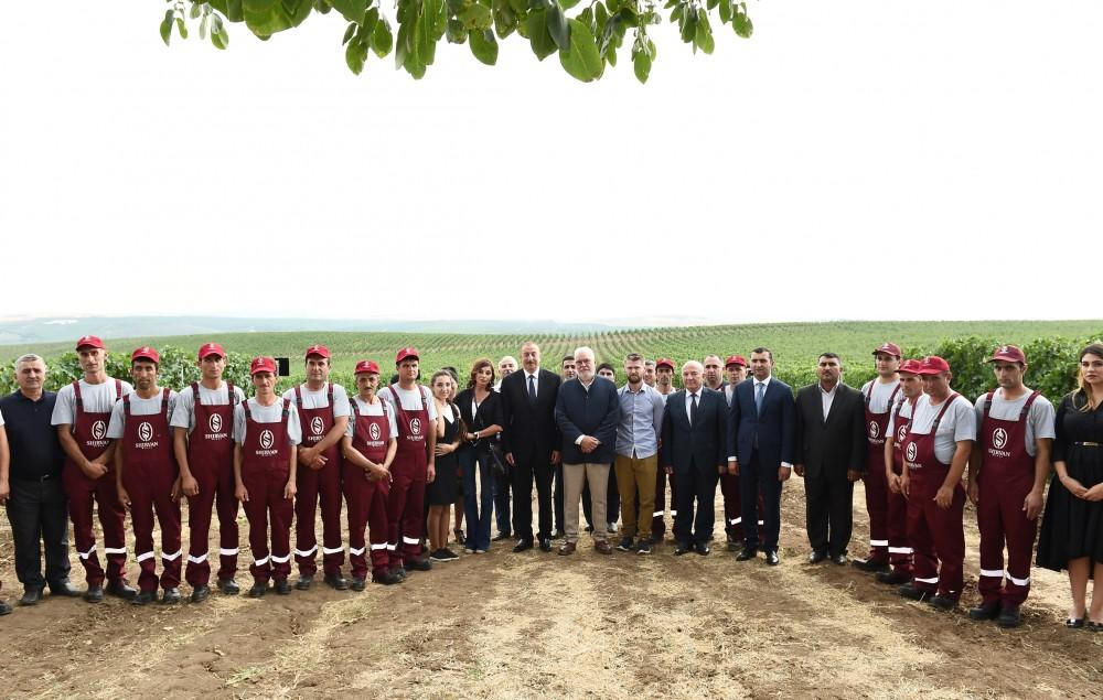 President Ilham Aliyev, first lady Mehriban Aliyeva attend opening of vine-growing and wine-making complex of Shirvan wines LLC in Shamakhi district (PHOTO) - Gallery Image