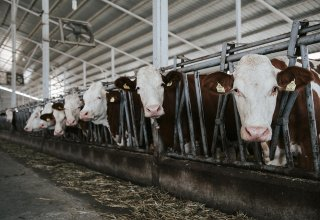Investments into Kazakhstan's animal husbandry increase by nearly 40%