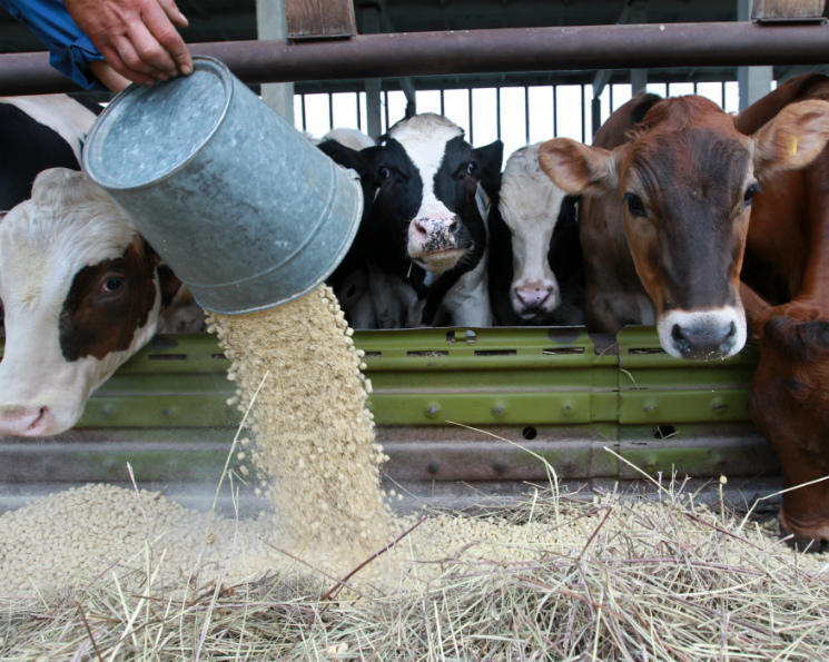 10 dairy farms to be built in northern Kazakhstan