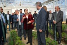 New greenhouses being created in Azerbaijan as part of WB project (PHOTO) - Gallery Thumbnail