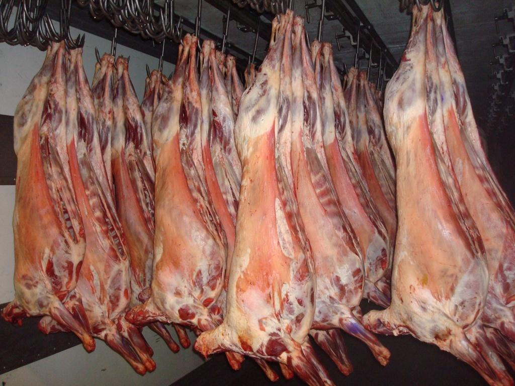 Lamb exports from Kazakhstan drop year-on-year