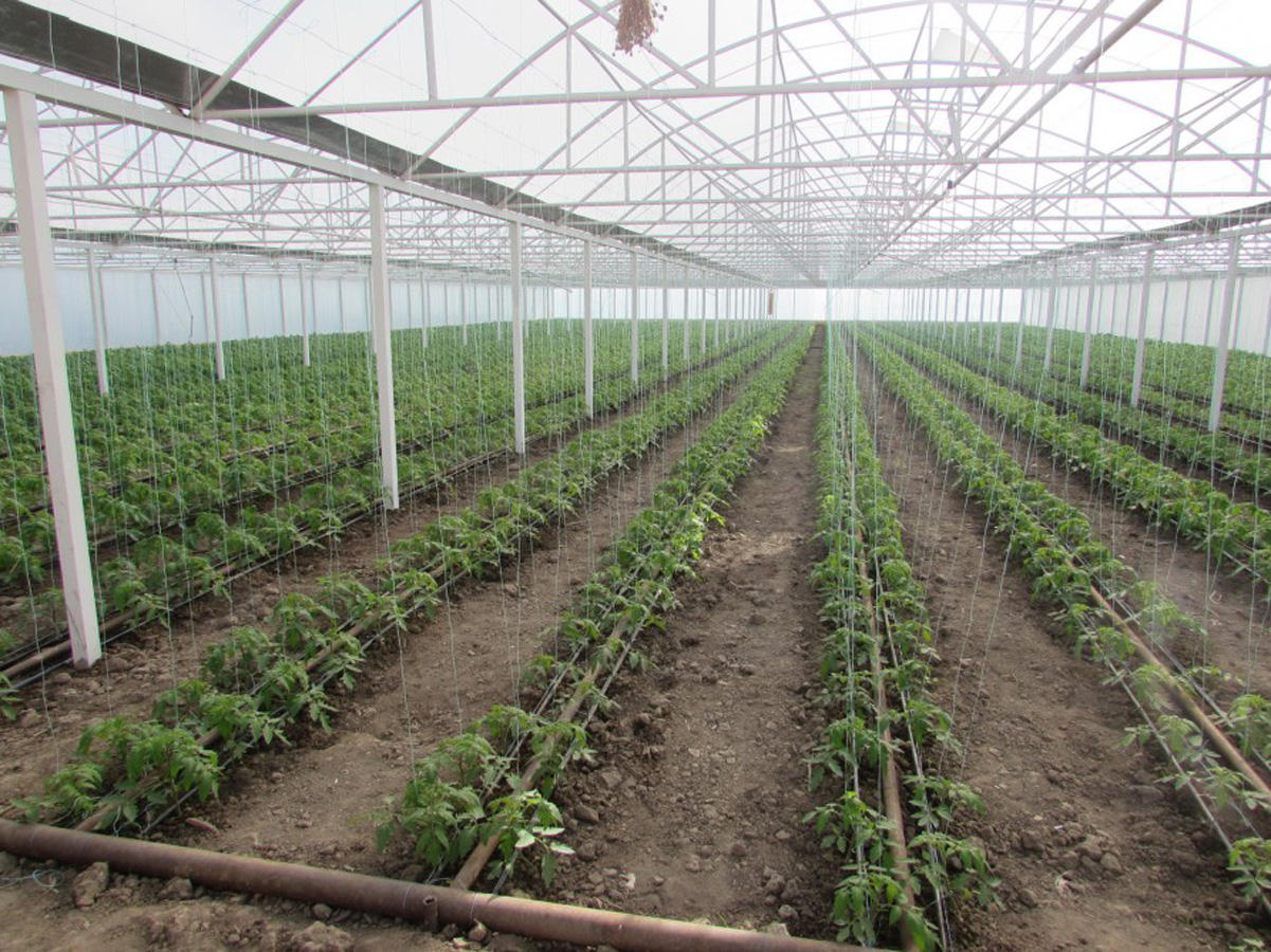 Kazakhstan's Shymkent to oversee implementation of various agro-industrial projects