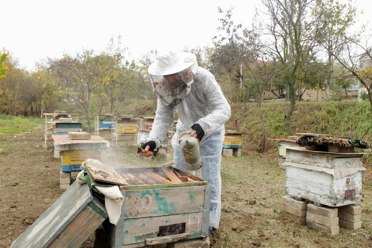 Beekeepers in Uzbekistan to be linked with innovative information exchange system