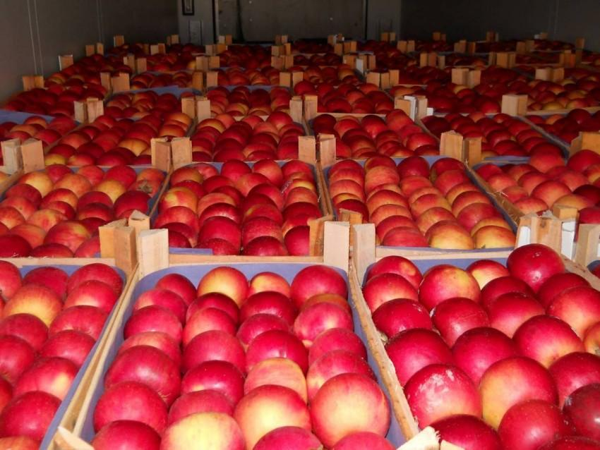 Georgia reveals data on sales of nonstandard apples