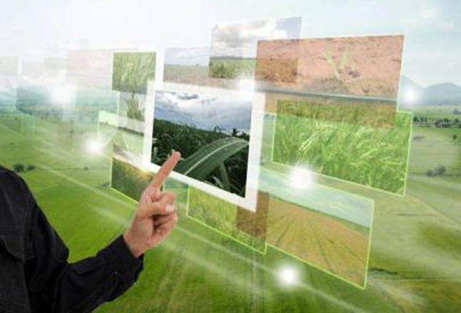 Uzbekistan, FAO in talks over digital agriculture strategies