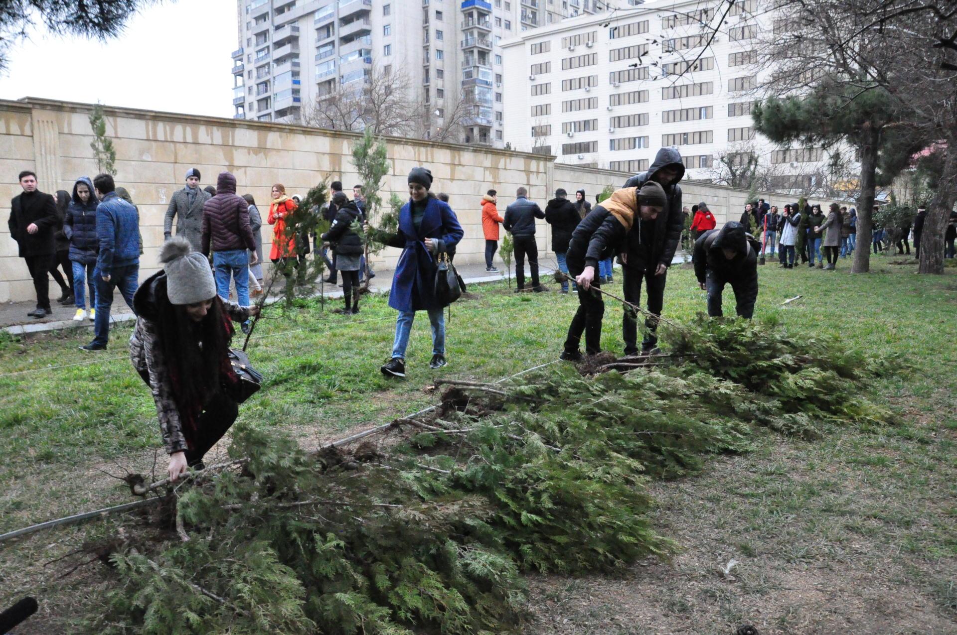 """""""Bakı Dövlət Universitetinin 100 illiyinə 100 ağac"""" (FOTO) - Gallery Image"""