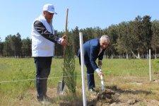 Yaz ağacəkmə kampaniyası çərçivəsində 863 mindən çox   ağac əkilib (FOTO) - Gallery Thumbnail