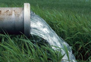 Israeli-led research reveals plant mechanism for dealing with water shortage