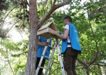 Urban Ecology Project continues successfully in Baku (PHOTO) - Gallery Thumbnail