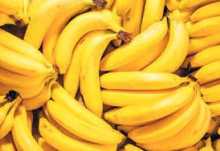 Turkmen greenhouse plans to harvest large crop of bananas