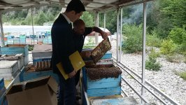 Azerbaijan's SME Development Agency supports entrepreneurs dealing with beekeeping (PHOTO) - Gallery Thumbnail