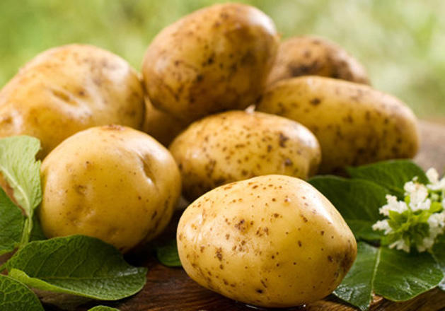 Russia to export potato seeds to Turkmenistan