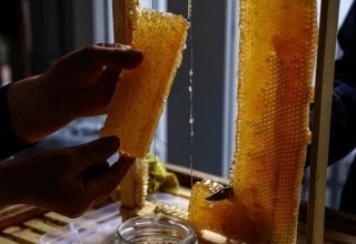 Beekeepers selected for participation in honey fair in Azerbaijan