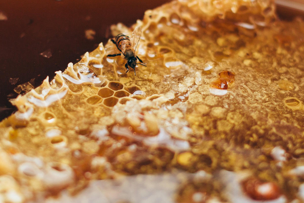 Beekeepers selected for participation in honey fair in Azerbaijan - Gallery Image