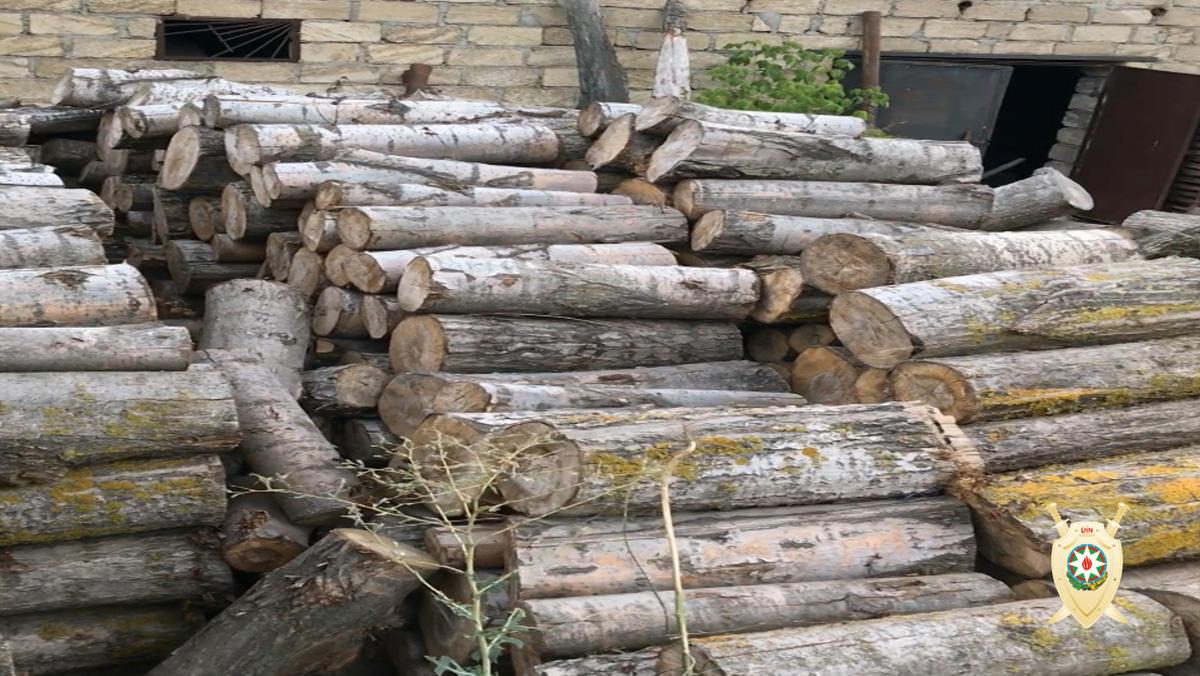 Quba və Qusarda meşə massivlərində ağacları kütləvi olaraq qıran dəstə üzvləri saxlanılıblar (FOTO) - Gallery Image