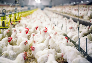Azerbaijan imposes restrictions on import of poultry meat from Estonian county