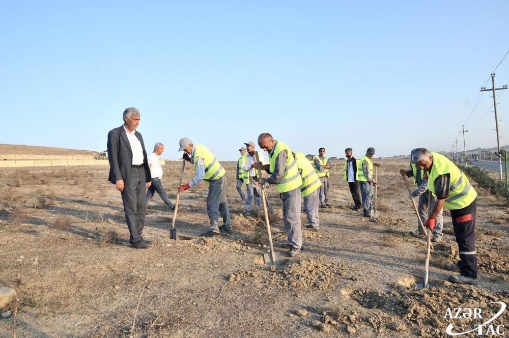 Azerbaijan's Absheron district's residents preparing to participate in initiative to plant 650,000 trees