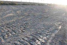 В Сабирабадском районе будет посажено 50 тыс. деревьев (ФОТО) - Gallery Thumbnail