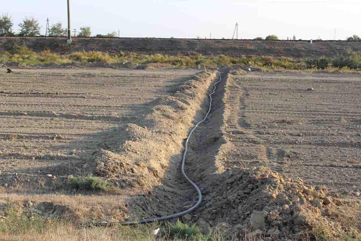 В Сабирабадском районе будет посажено 50 тыс. деревьев (ФОТО)