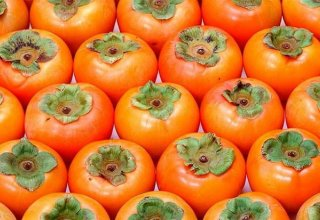 Azerbaijan to export persimmons to Slovakia and Czech Republic