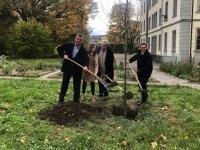 В швейцарском кантоне Тургау отведен земельный участок для дерева, посвященного Азербайджану (ФОТО) - Gallery Thumbnail