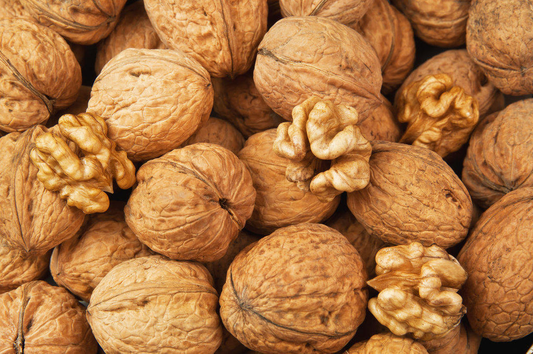 Georgian Agronet company plans to build walnut processing plants