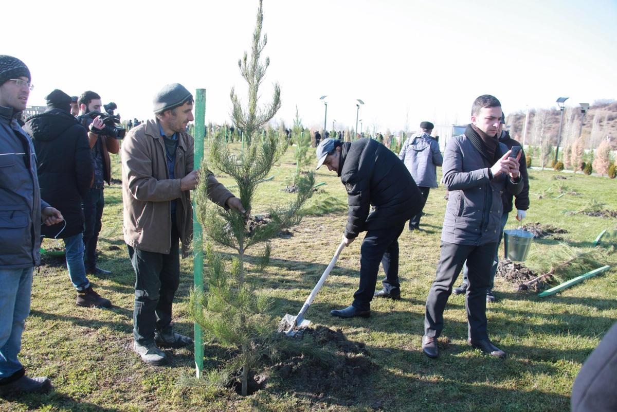 Şəkidə genişmiqyaslı kampaniya çərçivəsində minlərlə ağac əkilib (FOTO) - Gallery Image