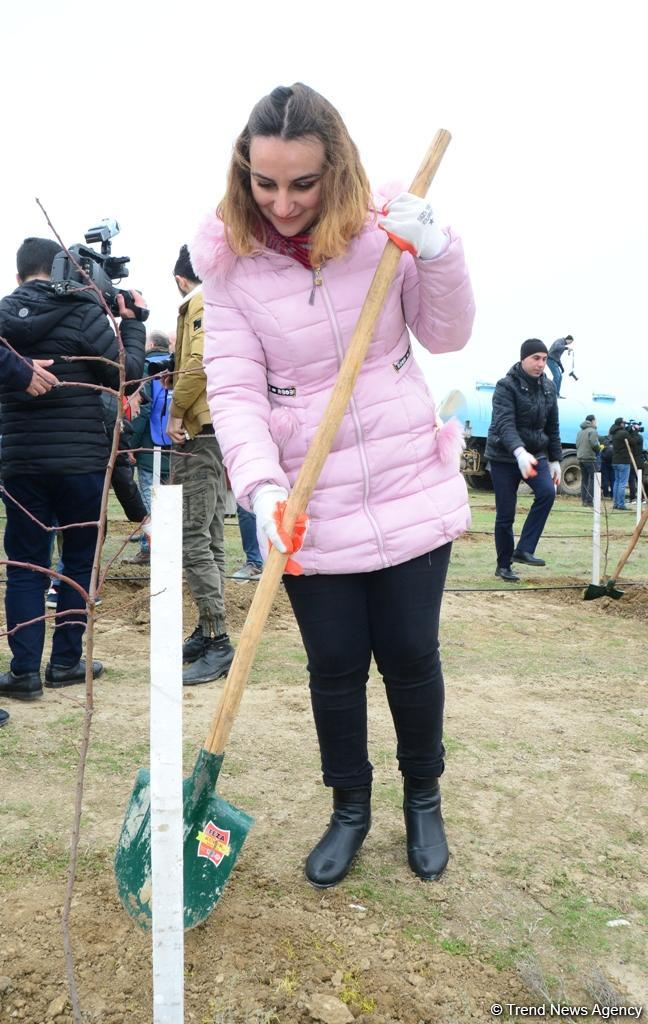 Trend.az, Day.az, Milli.az & Azernews.az staff take part in tree planting campaign (PHOTO/VIDEO) - Gallery Image
