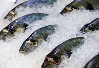 78 tons of frozen fish exported from Iran's Kordestan province