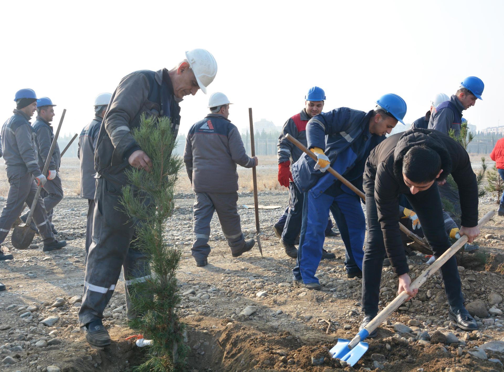 Azerbaijan's Azeraluminium holds tree planting campaign in memory of national leader Heydar Aliyev (PHOTO)