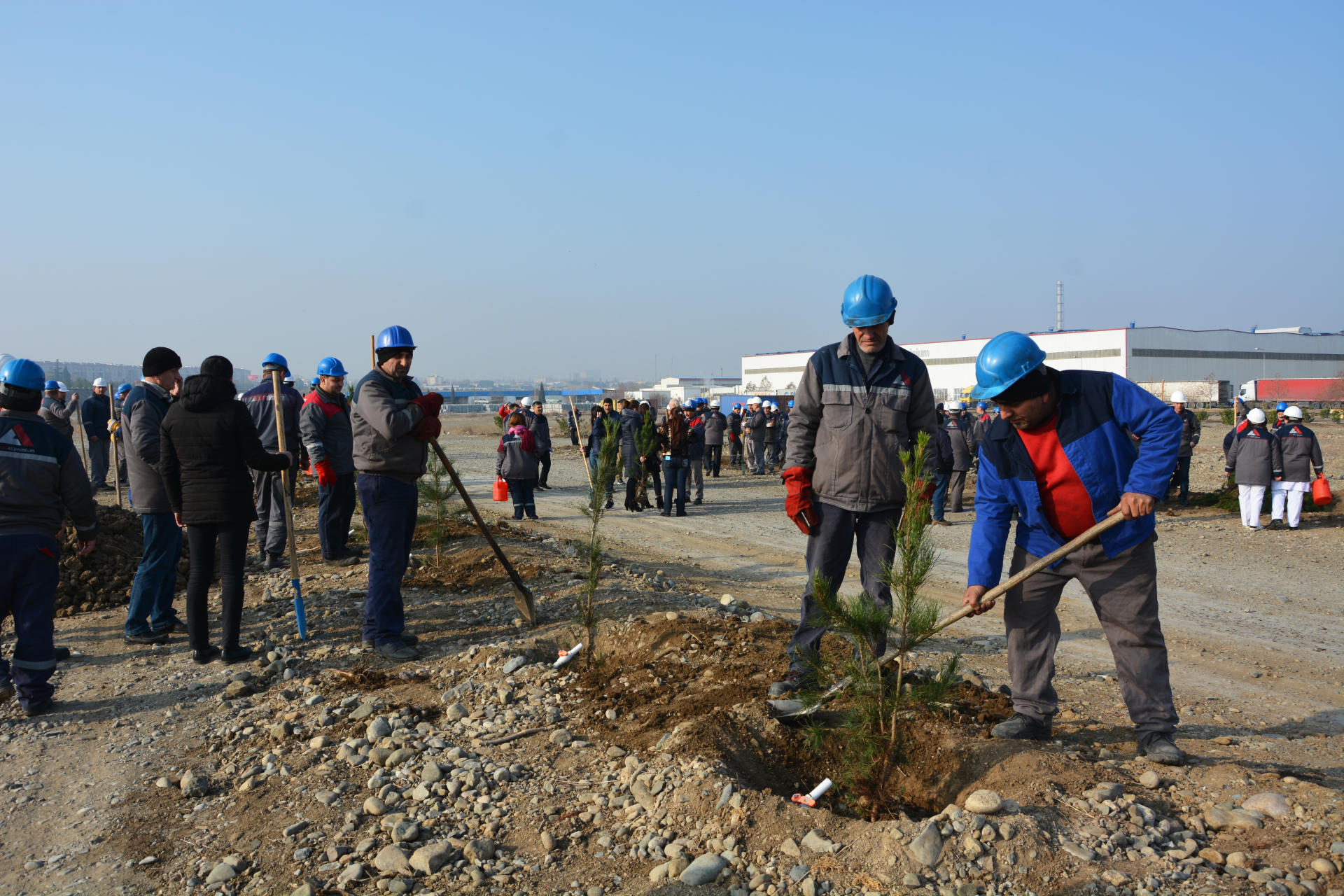 Azerbaijan's Azeraluminium holds tree planting campaign in memory of national leader Heydar Aliyev (PHOTO) - Gallery Image