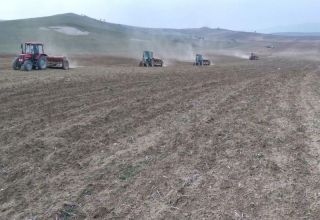 Turkmenistan's Kaakhkinsky district expands areas for vegetable, fruit crops