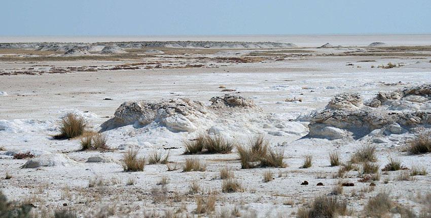 В Азербайджане разработаны методы использования солончаковых земель