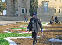 В Аллее шехидов в Баку проводятся подготовительные работы в связи с годовщиной  трагедии 20 Января (ФОТО) - Gallery Thumbnail