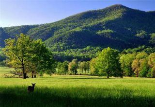 В Грузии будут строже наказывать за нанесение ущерба природе