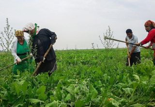 Azerbaijani women farmers to receive technical support
