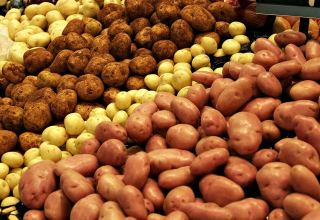 Turkmenistan among top three countries in terms of potato imports from Russia