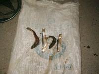 Karantin qaydalarını pozaraq balıq ovlayan beş nəfər saxlanıldı (FOTO) - Gallery Thumbnail