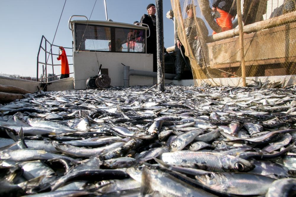 Iranian fisheries company interested in exporting their products to Turkmenistan