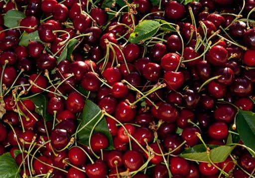 Uzbekistan expands supply chain of wild cherries