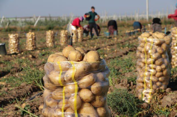 Large harvest of potatoes, onions expected in Turkmenistan